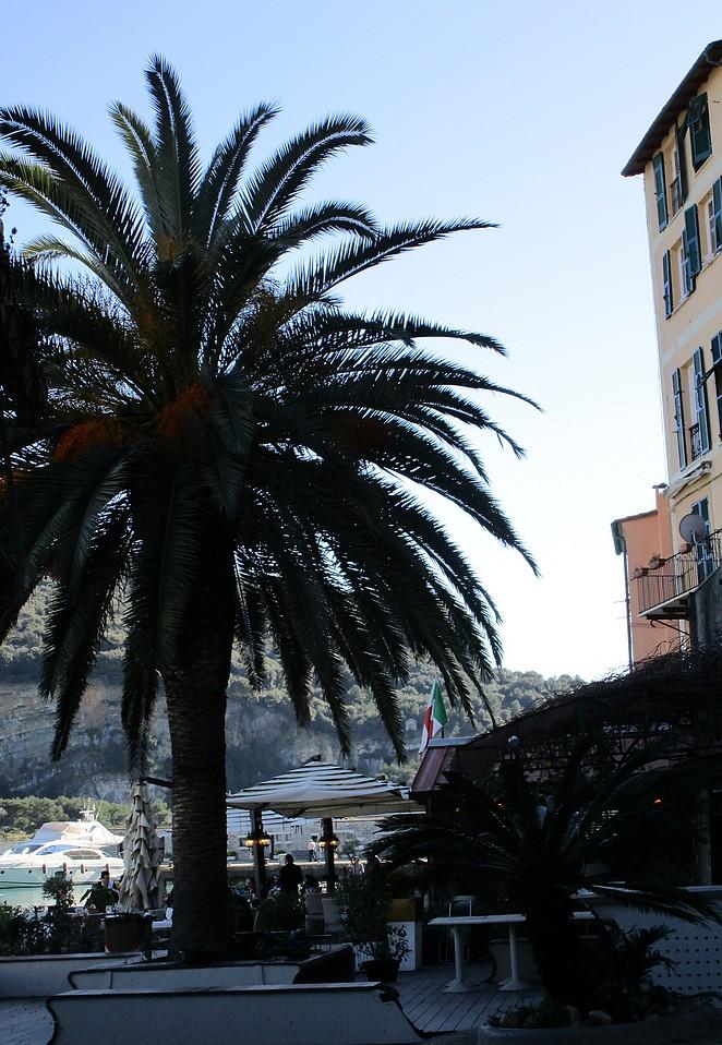 palmboom-portovenere