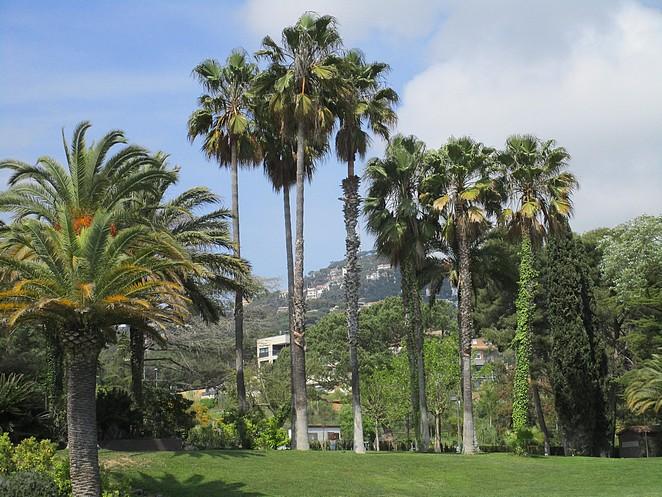 Tuin van hotel Guitart Monterrey