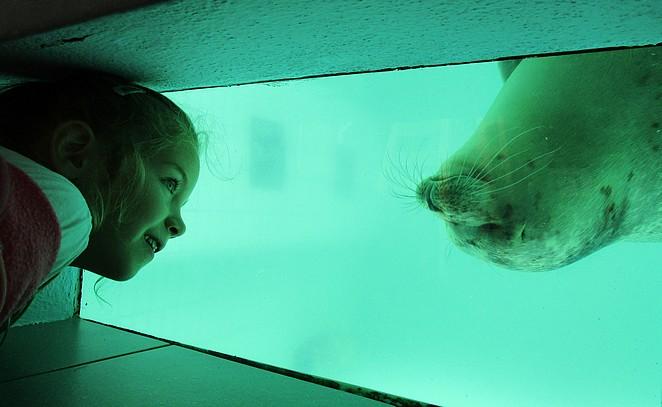 Bo bij zeehond