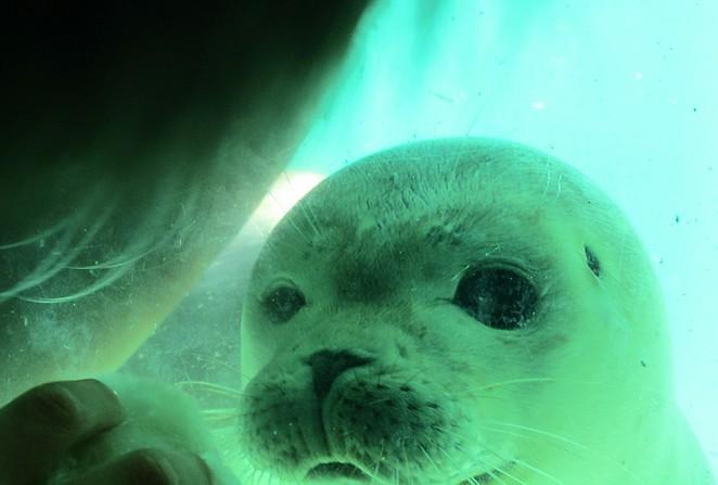 Lieve zeehondjes