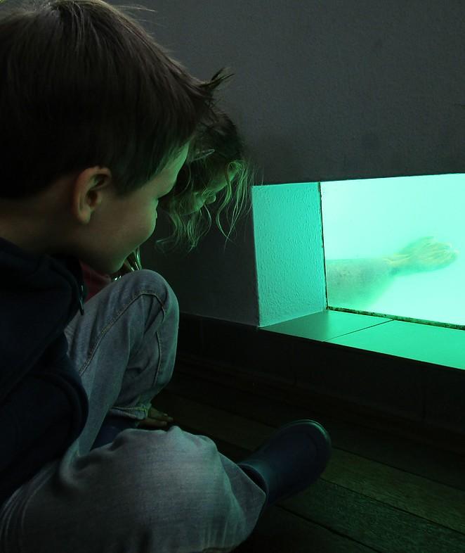 Naar de zeehonden kijken