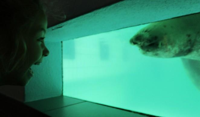 Oog in oog met een zeehond