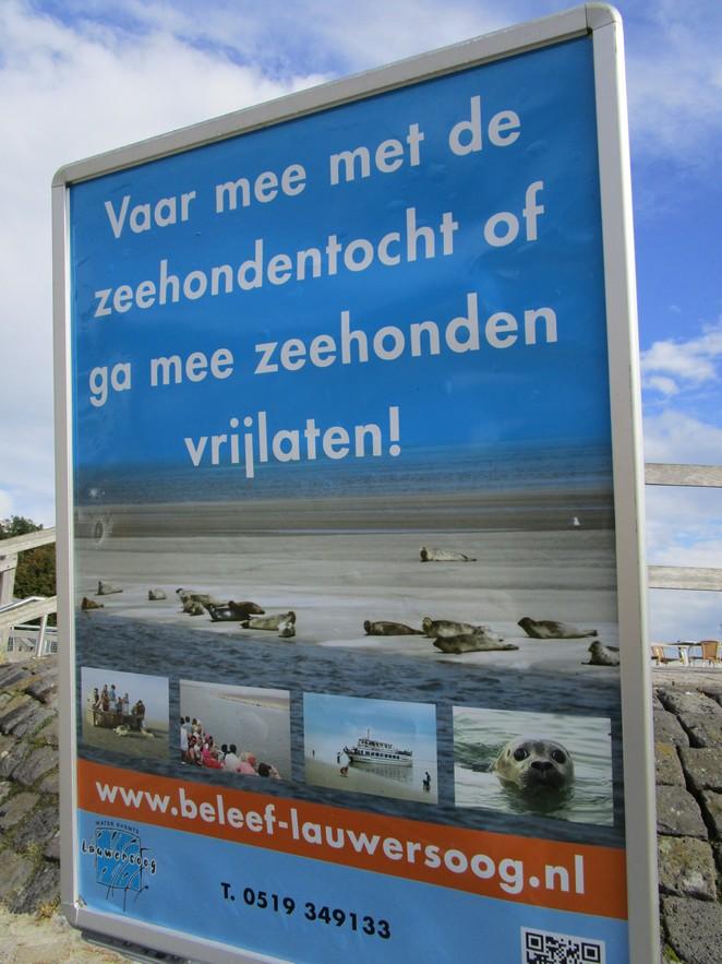 zeehonden-vrijlaten-lauwersoog
