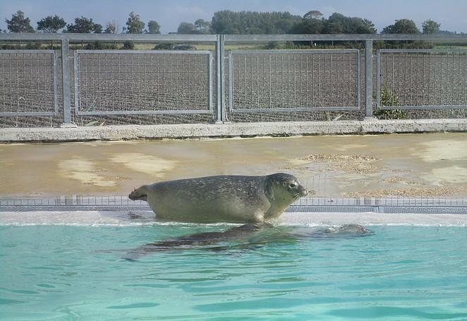 Zeehondje op de kant in Pieterburen
