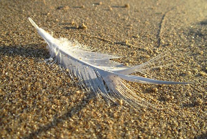 Veertje op het strand foto Denise Miltenburg