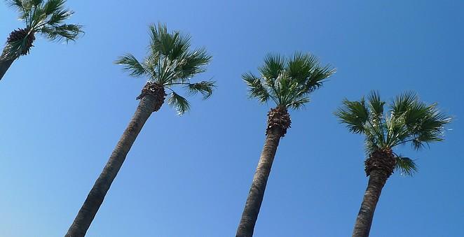 Blauwe lucht en palmbomen Kusadasi Turkije