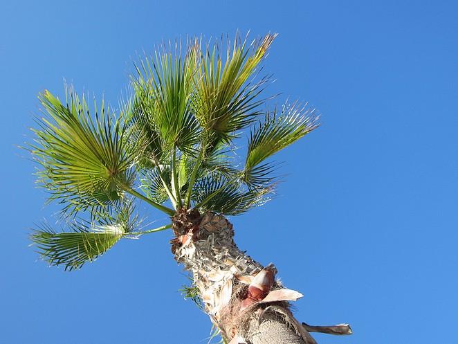 I love palmtrees