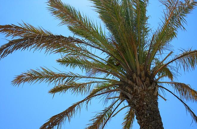 Onder een palmboom