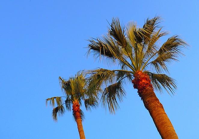 Palmbomen Turkije