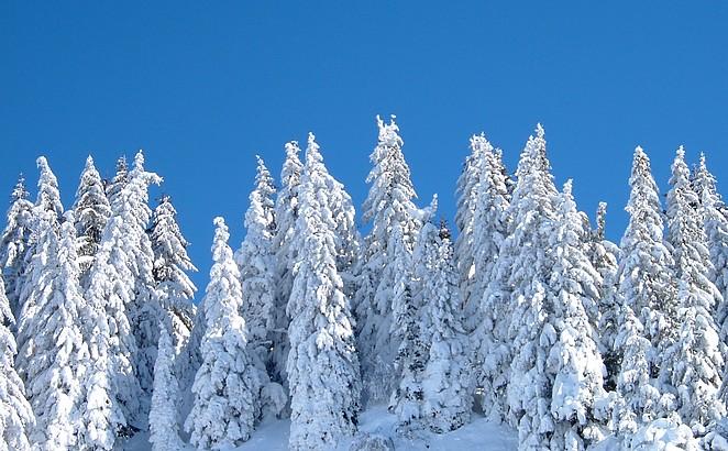 Sneeuw op de bomen wintersport