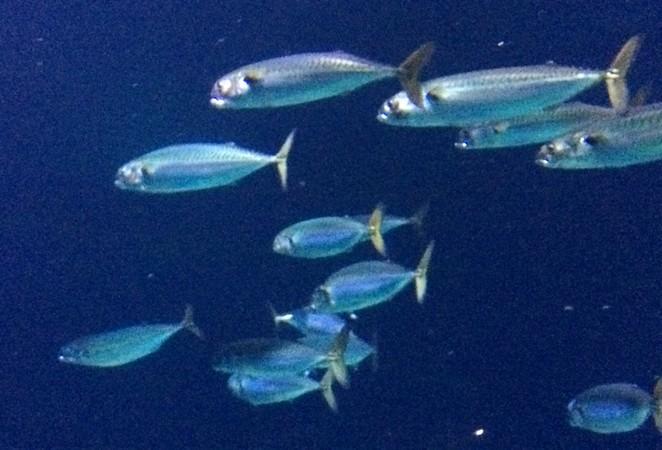 Tropische vissen in Blijdorp