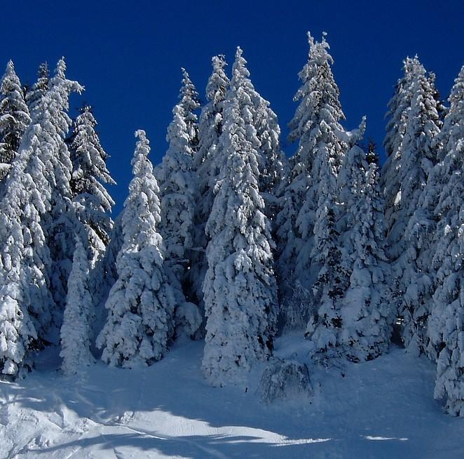 bomen sneeuw denise miltenburg
