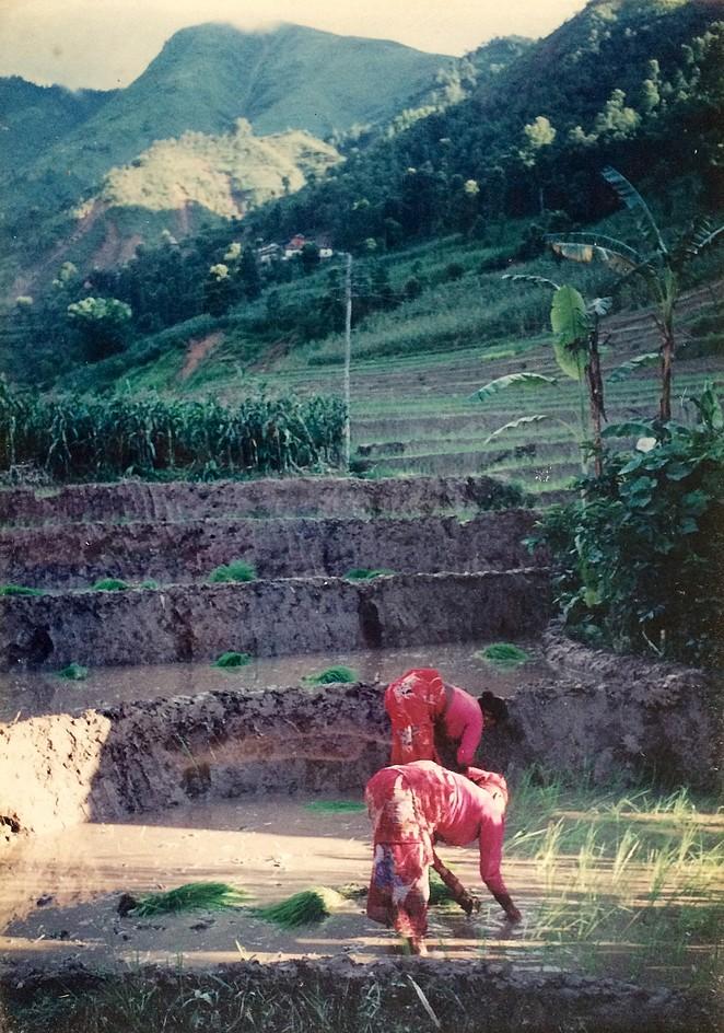 Vrouwen werken in het veld Nepal