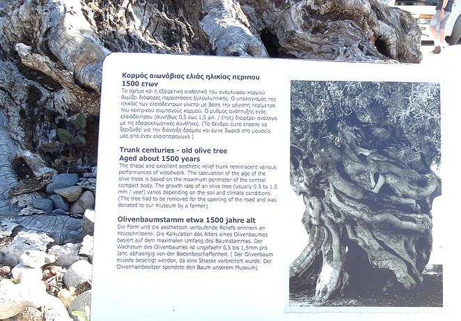 olijfboom-museum