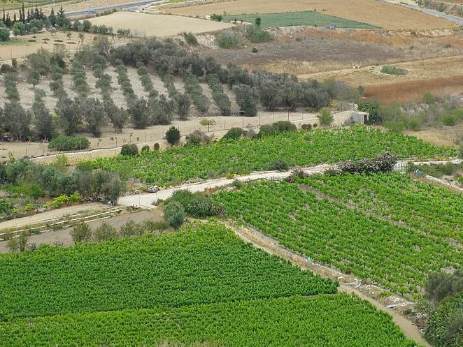 wijngaarden-malta