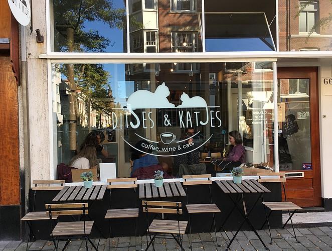 Kattencafé-Den-Haag