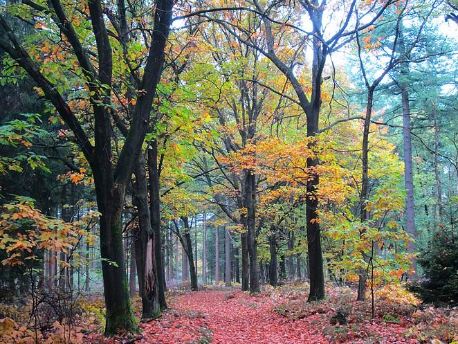 knalkleuren-in-de-herfst