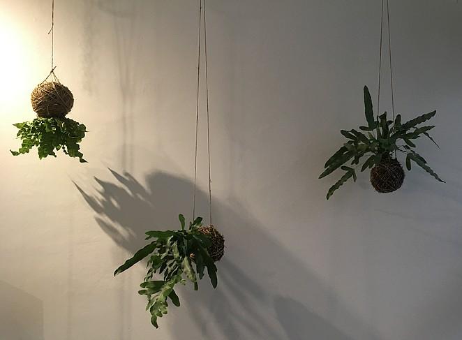 planten-aan-muur