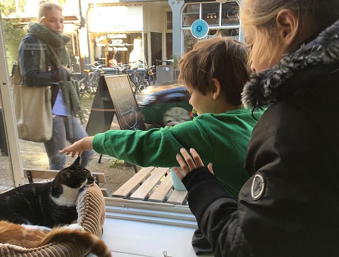 Poes-aaien-kattencafé