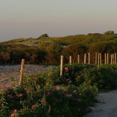 Top 3 mooiste natuurgebieden van Nederland