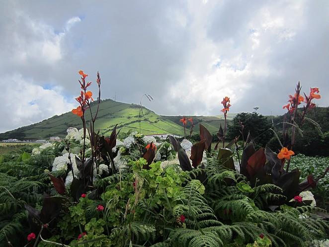 bloemen-Santa-Cruz-Flores