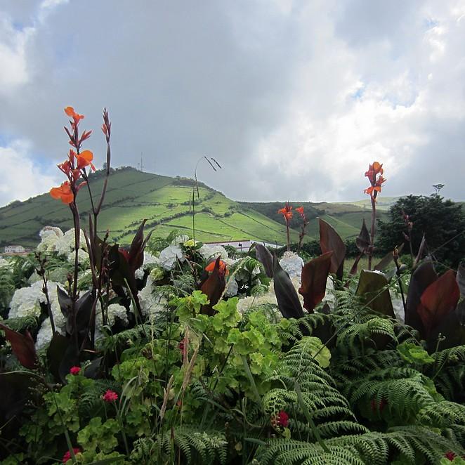 Flores-natuur