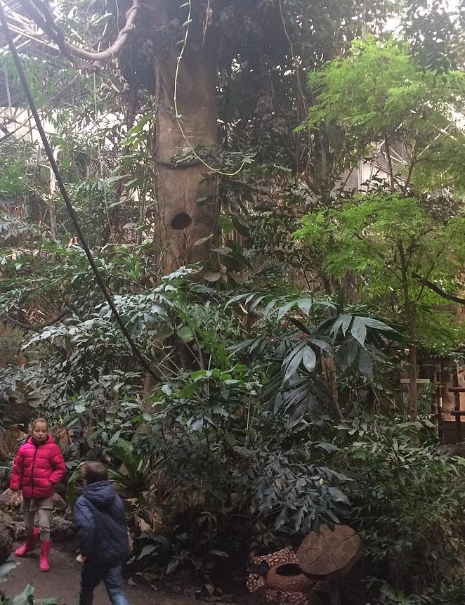 Amazonica-Blijdorp