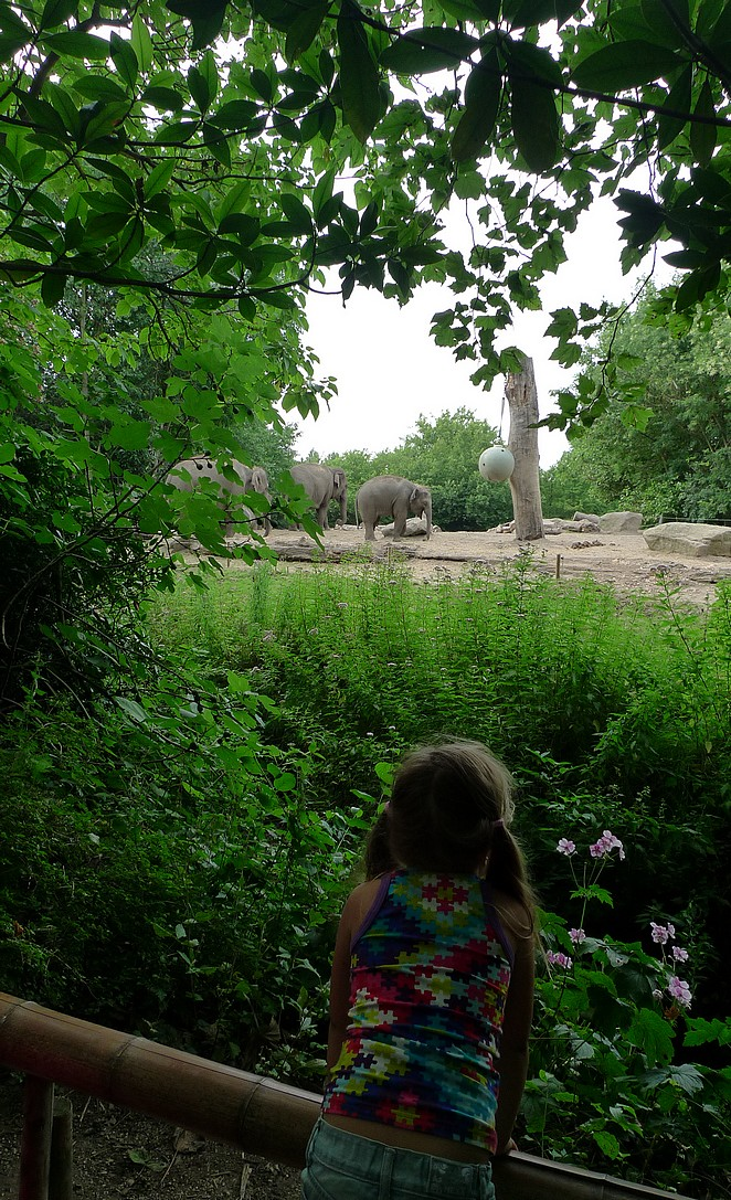 olifanten-Blijdorp