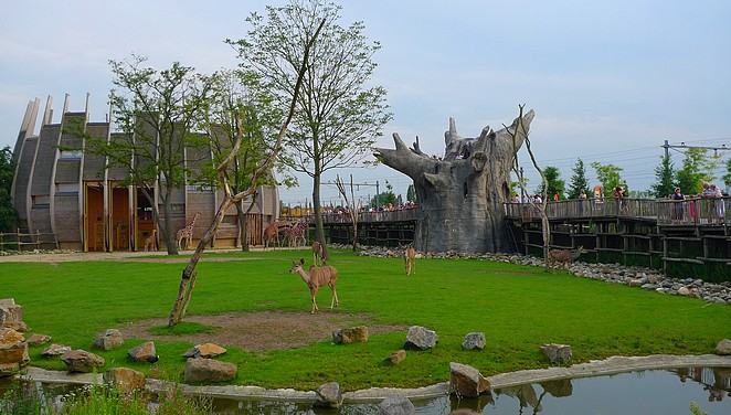 Giraffes-Blijdorp