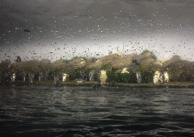 Pinguins-Blijdorp-regenbui