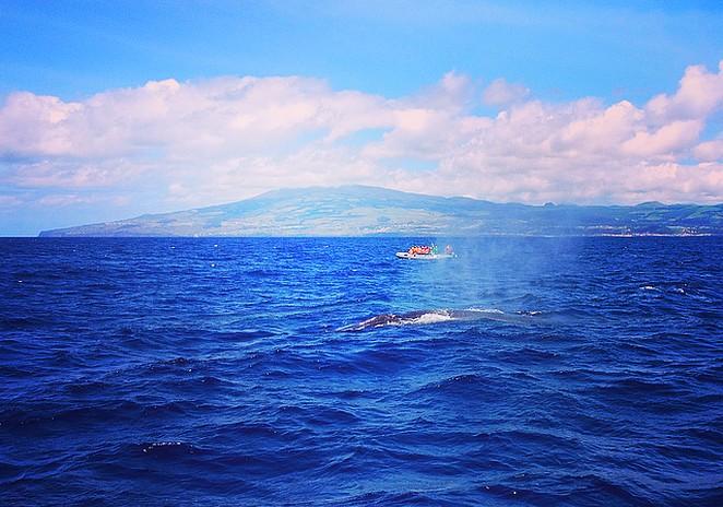 Walvissen-spotten-Azoren-Terceira