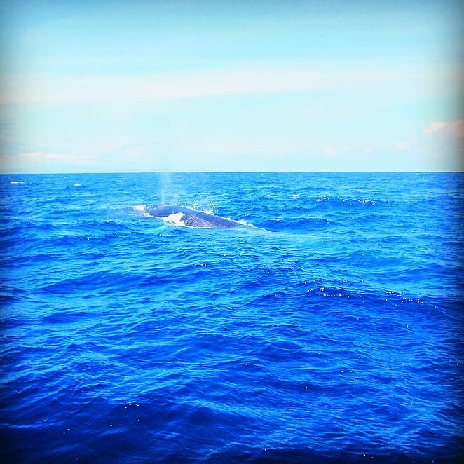 Walvis-spotten-Terceira