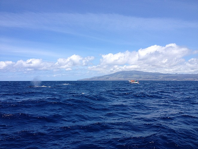 Walvissen-zoeken