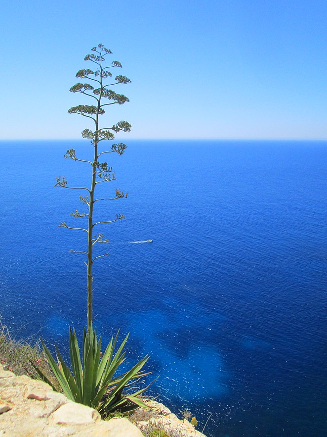 Zee-bij-Blue Grotto-Malta