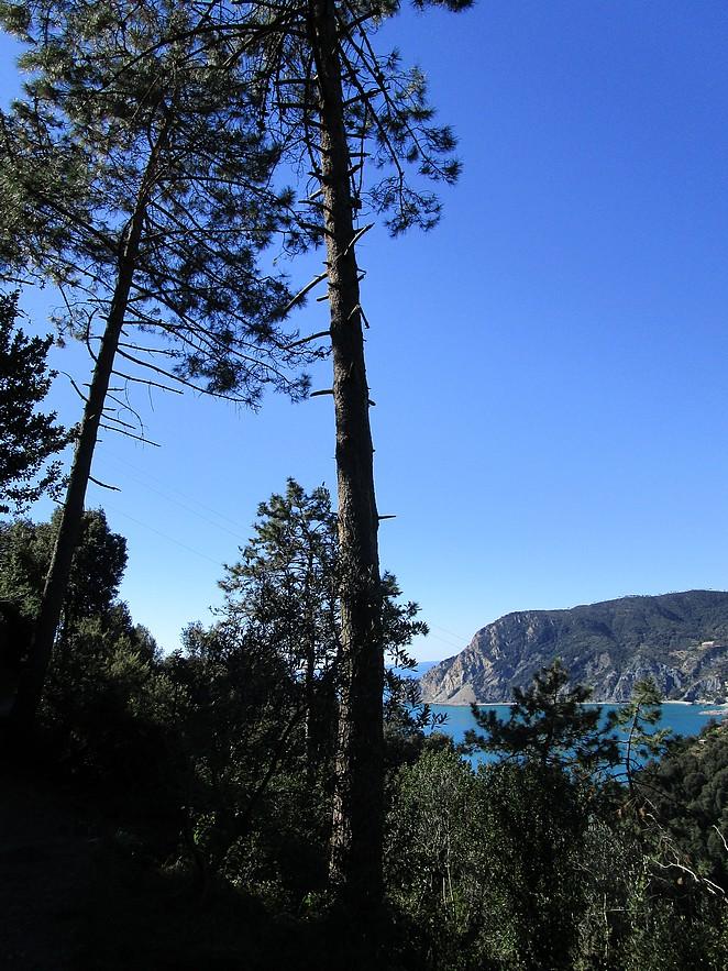 pijnbomen-italie