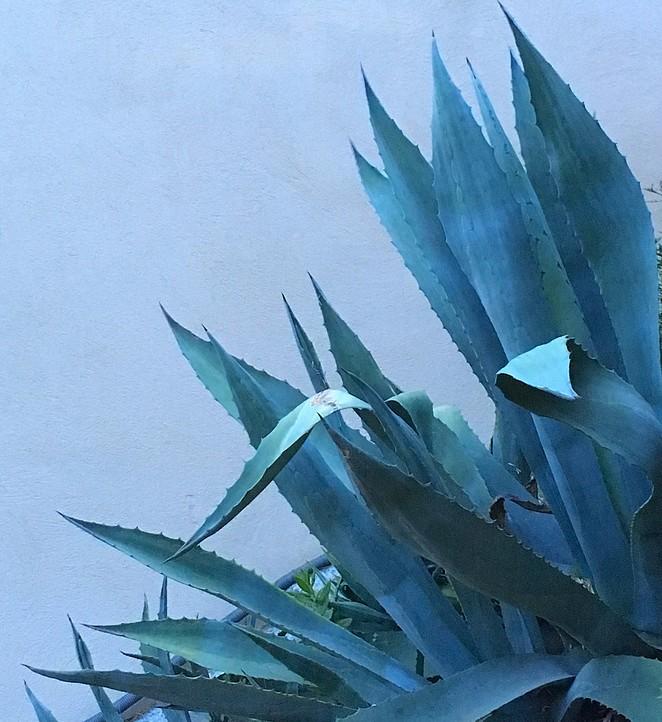 cactus-zuid-frankrijk