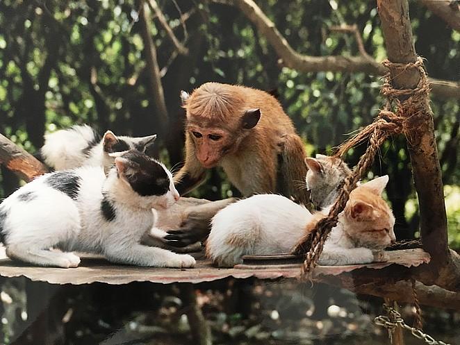 lief-aapje-met-poesjes