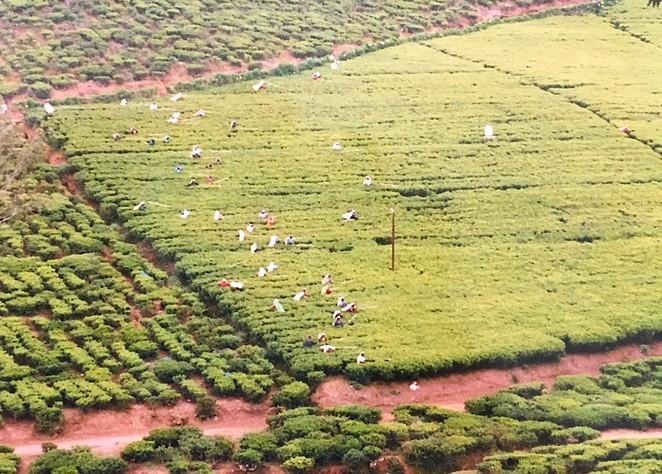 theeplantages-sri-lanka