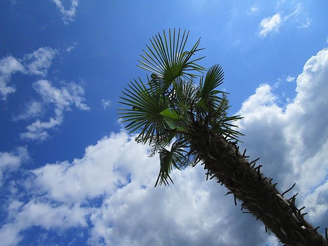 palmboom-slagharen