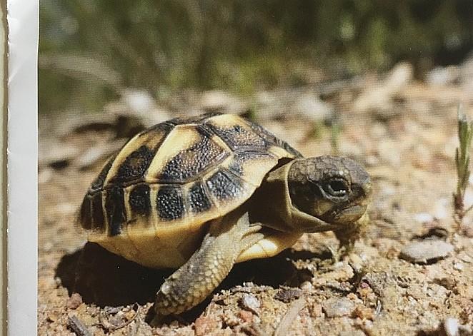 schildpadden-cote-d-azur