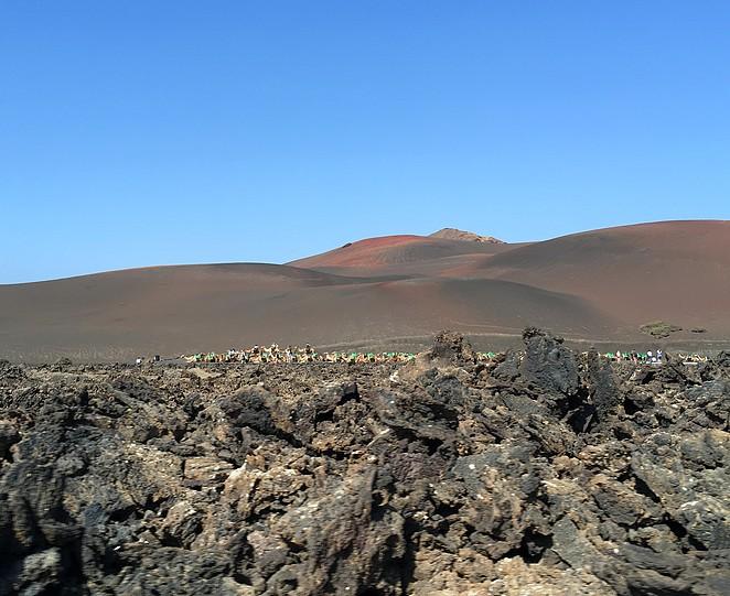 dromedaris-Lanzarote-kamelenrit