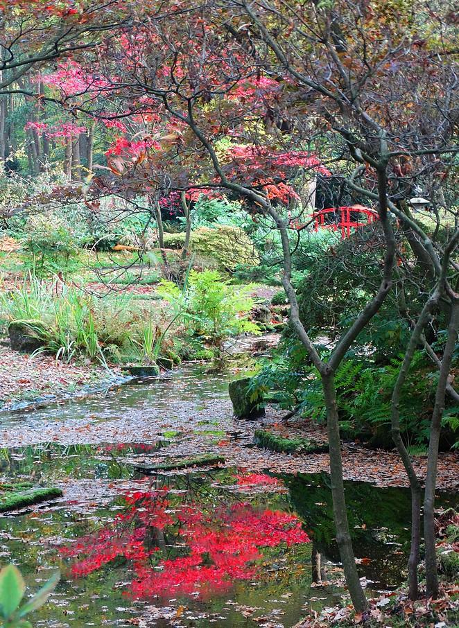 Japanse-tuin-Den-Haag