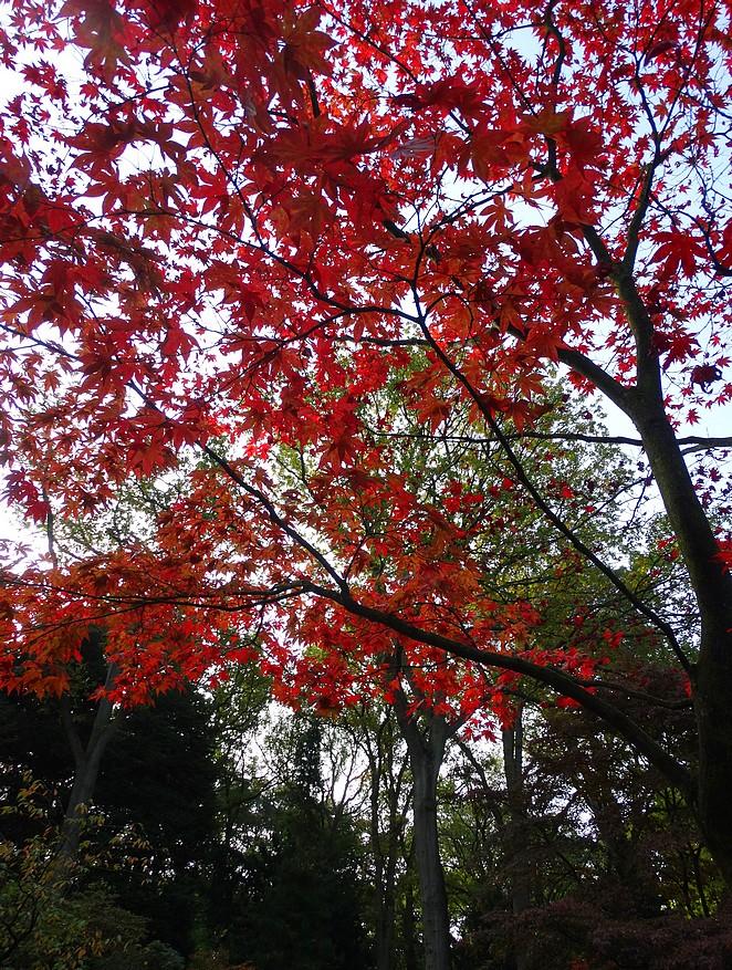 boom-met-rode-blaadjes
