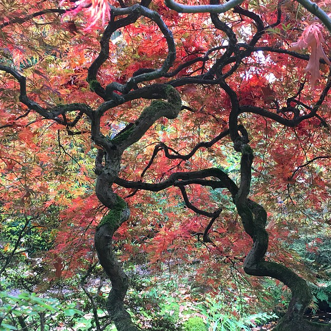 De Japanse tuin in Den Haag