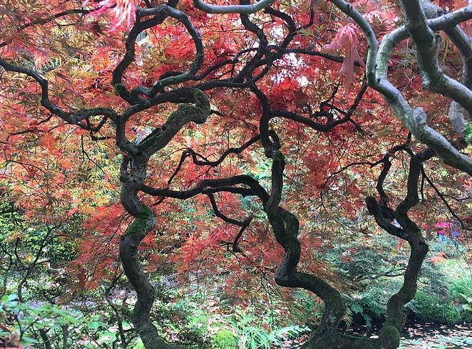 foto-japanse-tuin