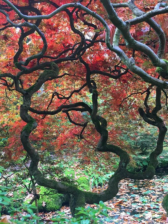 japanse-tuin-reisblog