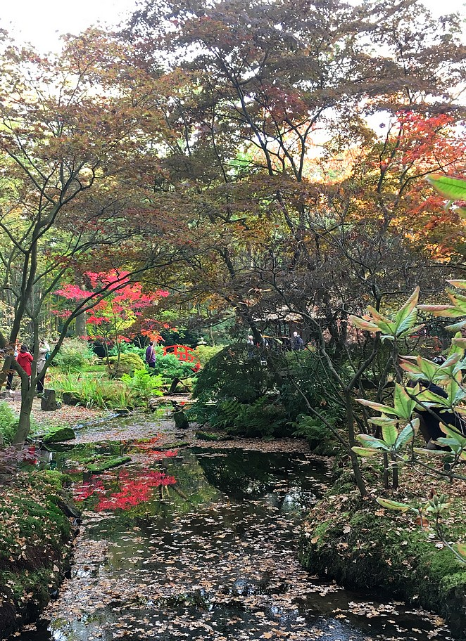 japanse-tuin-oktober