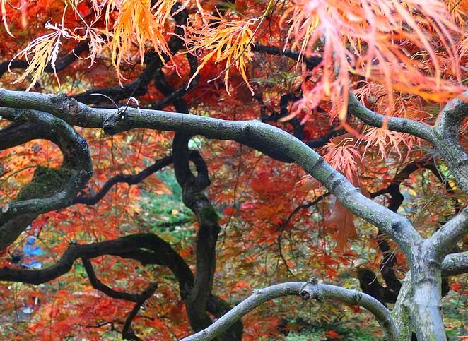 mooiste-foto-japanse-tuin