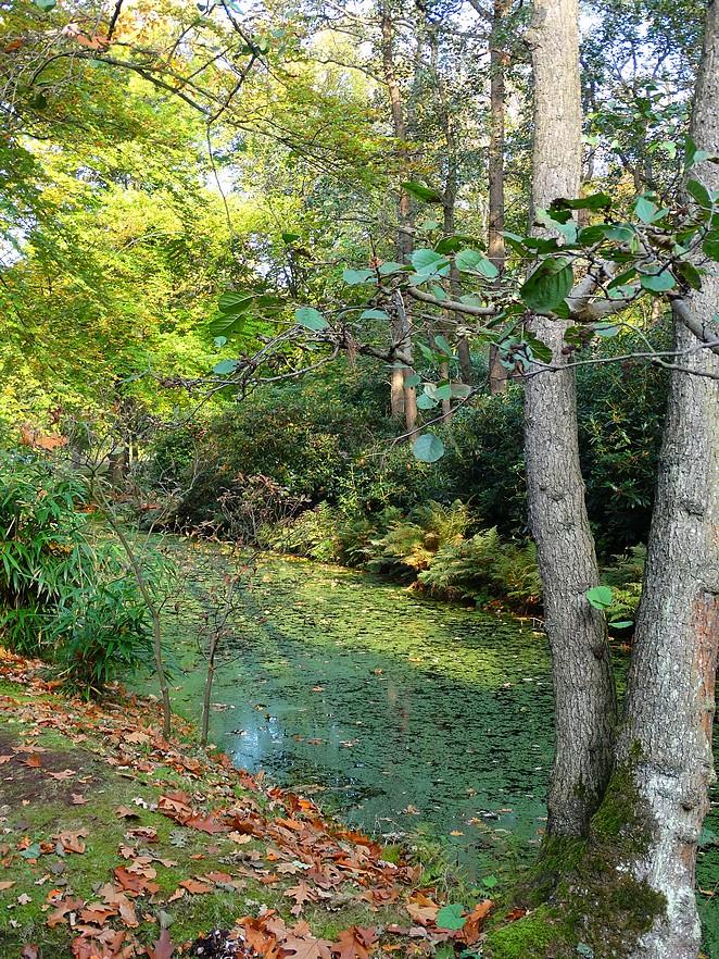natuur-den-haag-bos