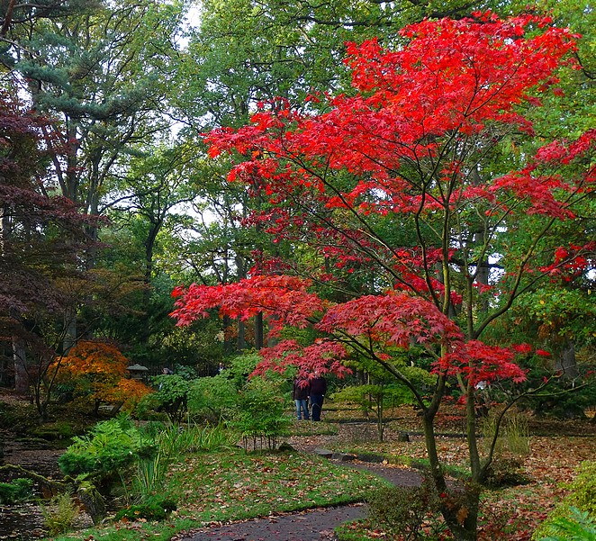 rustig-moment-japanse-tuin